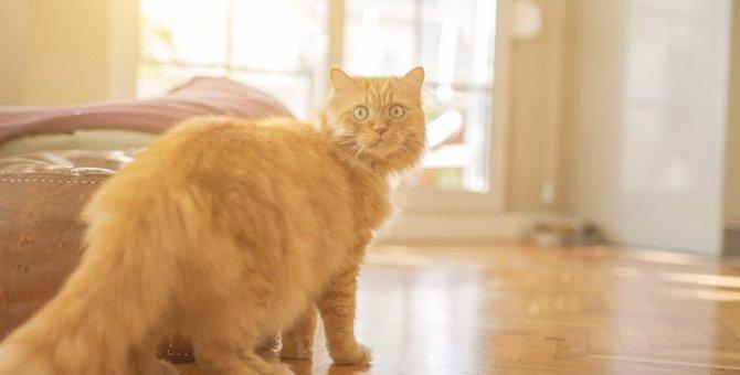 猫が『落ち着きなく動き回る』ときに考えられる理由5つ