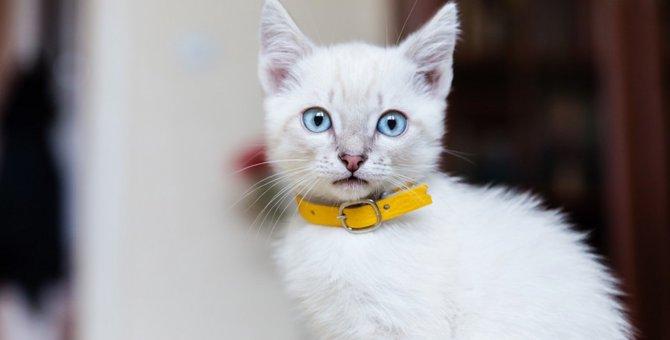 通販で買える猫の首輪おすすめ5選