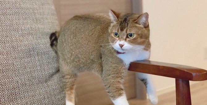 『ココ冷たい…』ひんやりを見つけた猫さんの姿がシュール過ぎると話題に♡