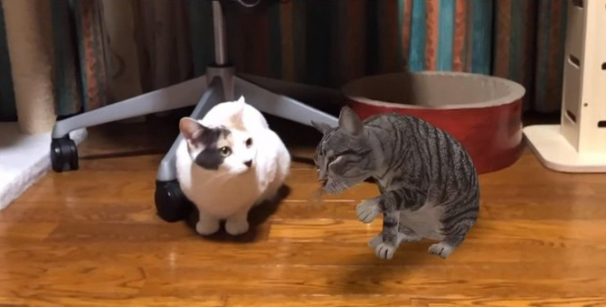 Google検索で猫が出る?!他の動物と「うちの子」コラボも♪