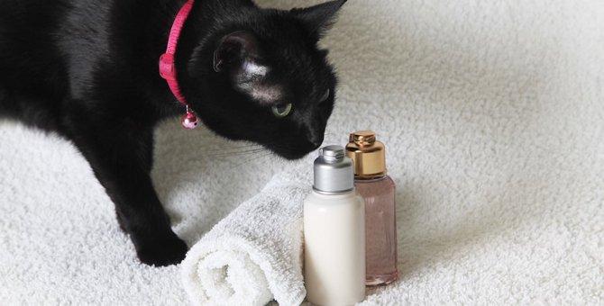 猫にアロマオイルは危険?理由や症状、対策など