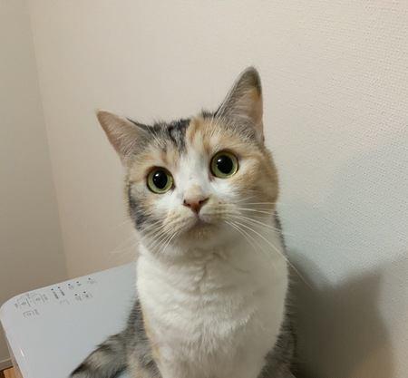 相性のいい猫の選び方3つ