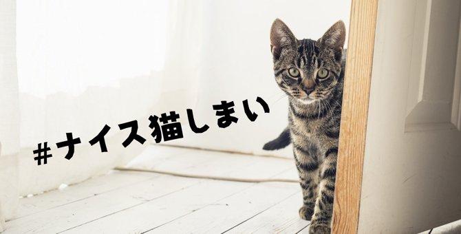 台風接近時の「#ナイス猫しまい」に改めて願うすべての猫の幸せ