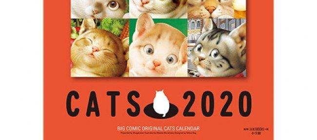 【発売中!】村松誠の『猫犬カレンダー』が可愛い♡