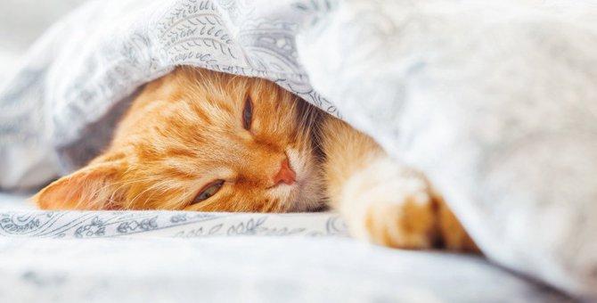 猫の木製ベッドおすすめ人気ランキング10選、選び方も解説