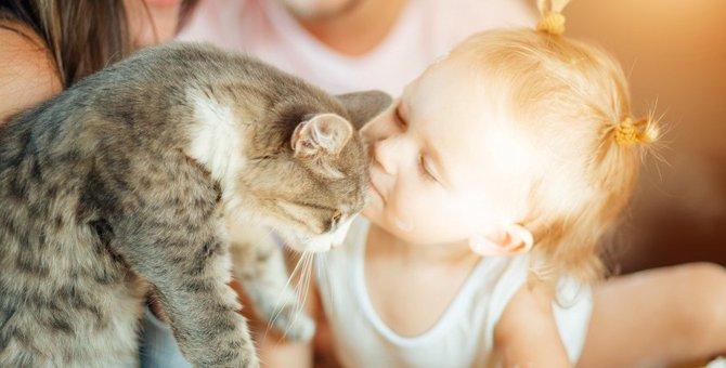 猫を飼っている家のゴキブリ対策!猫に安全な駆除の方法とは