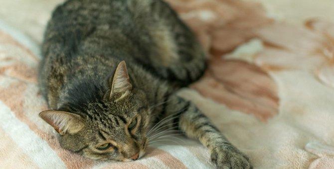猫を無視し続けると起きる危険なこと5つ