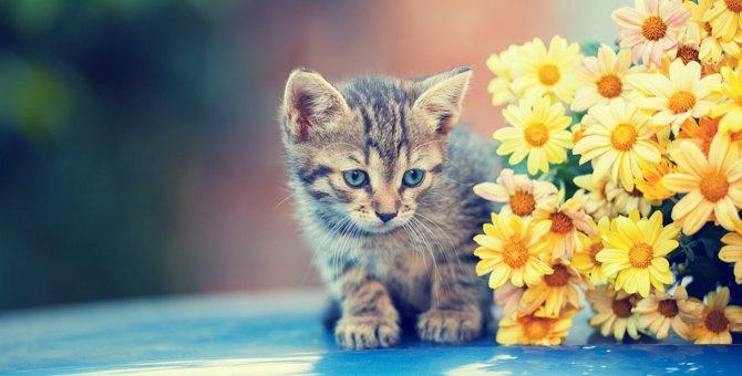 猫が『寂しい』と伝えたい時にみせるサイン3つ