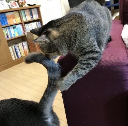 猫のしっぽがピーンと立っているときの気持ち4つ