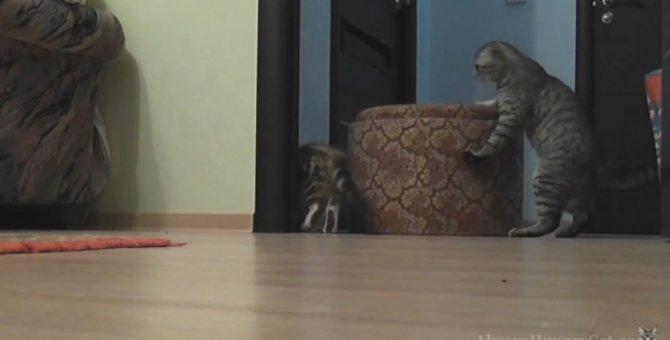 これぞ母の愛!まるで人間のようにソファを動かす猫