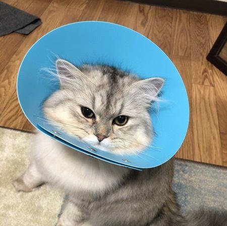 猫の目つきが悪くなる時の心理5つ