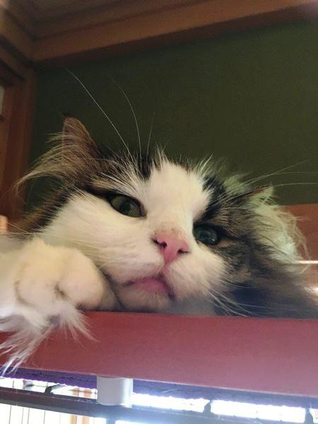 「自分が飼い主だ」と思っている猫がする行動3つ
