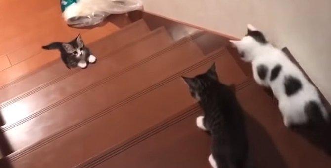 「おーい!おいでよ!」階段を上る勇気が出ない子猫が悶えるほど可愛い
