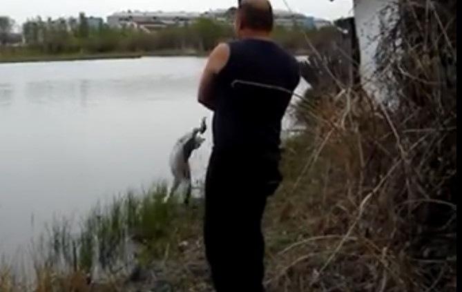 「この魚いただきにゃ!」釣った魚を横取りする猫