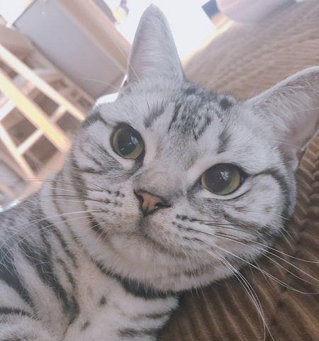 飼い主さん翻弄…猫が見せる計算高さ5つ