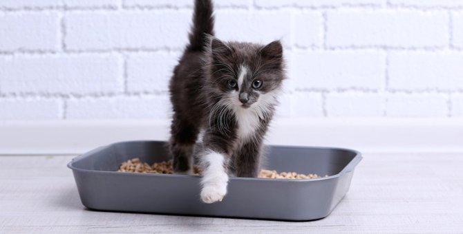 木系猫砂のおすすめ人気ランキング10選、選び方も紹介