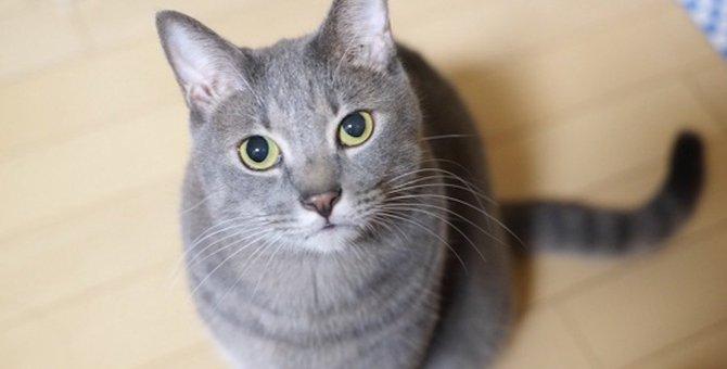 猫が飼い主にお願いしていること6つ