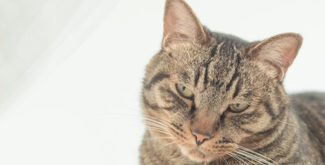 猫に『嫌われる飼い主』がしているNG行為4選