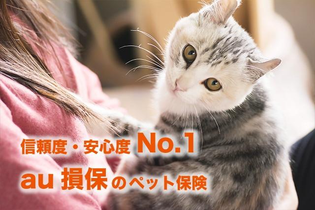 猫の保険でおすすめNo.1「au損保」とは