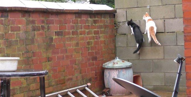 見事にシンクロ!同じ場所に着地で思わず困惑顔の猫2匹