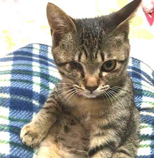 猫風邪で命の危機…片方の目がない子猫との出会い