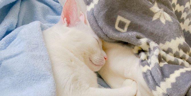 猫と『距離を縮めたいとき』にすべきこと3つ!仲良くなるための秘訣とは?