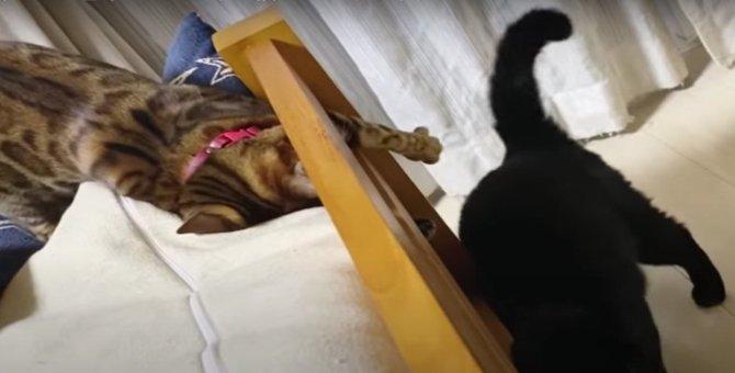 じゃれ合うのに猫パンチしちゃう!仲良しなママ猫さんたち♡