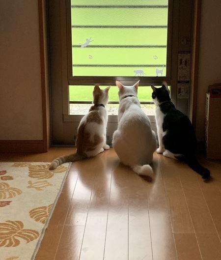 猫の『多頭飼い』あるある10個