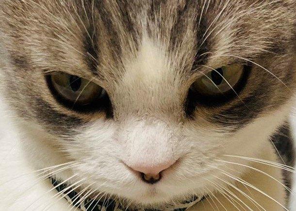 クローゼットに閉じ込められてしまった猫さんの『激おこ顔』が超話題!