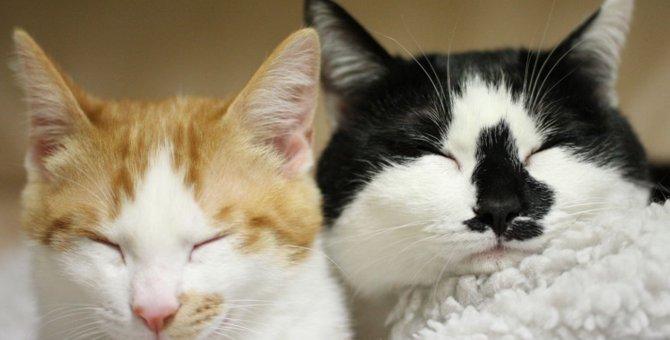 猫のオスメスの見分け方を知ろう!性別ごとの特徴や子猫・成猫での判別法