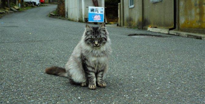 猫島ってどんなところ?猫島が抱える問題とは