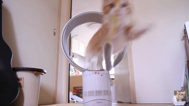 見よ!この躍動感!扇風機で輪くぐりするマンチカン