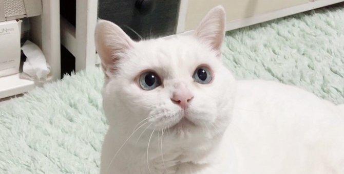 長寿猫に共通する5つのこと!長生きしている猫は何が違うの?