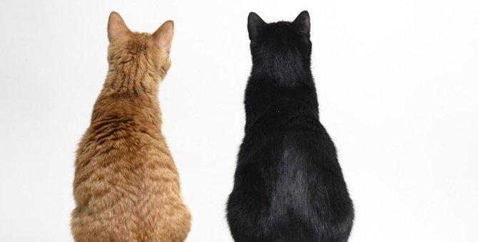 猫が飼い主に『お尻を向けている』時の気持ち4つ