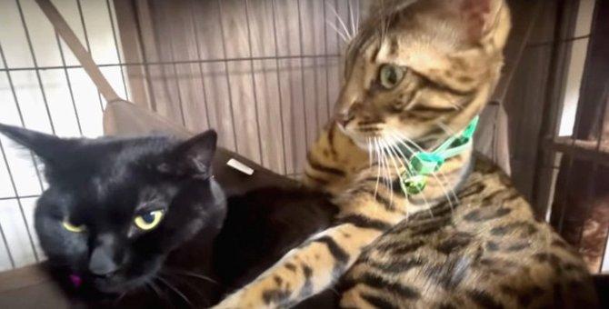 控えめ猫さんは何をしている?飼い主さんの実家で過ごす黒猫さんに密着!