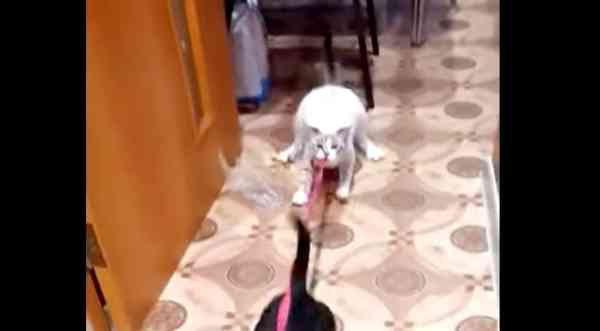 猫が犬の散歩を全力で阻止!?気になる結末はいかに!