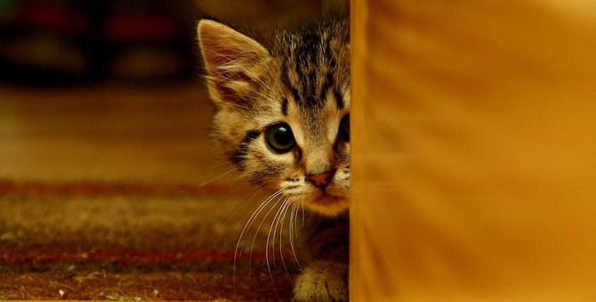 猫がトラウマになってしまう飼い主のNG行為2つ!実は愛猫に恐怖を与えているかも…