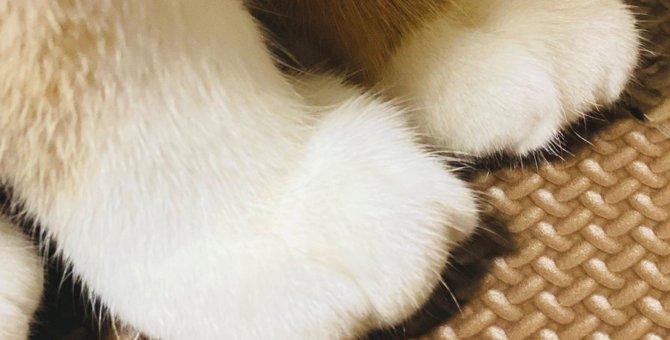 くりーむぱんじゃん!猫のおてての可愛さを再確認させられたと話題に♡