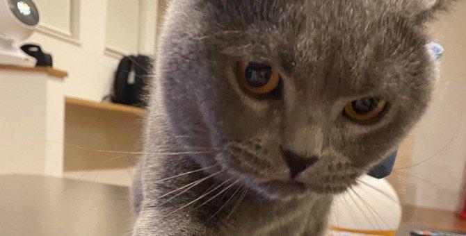 猫が飼い主を『独り占め』したくなる5つの要因