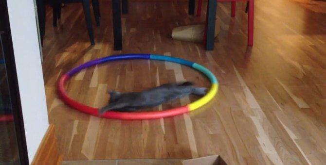 フラフープ、くるくる回るのは…猫の方?!