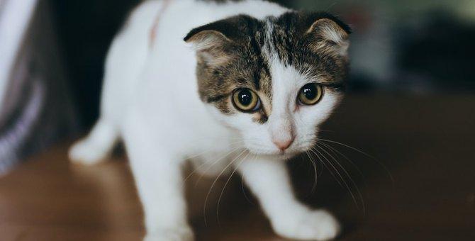 人馴れしていない猫がよくする仕草や行動3つ