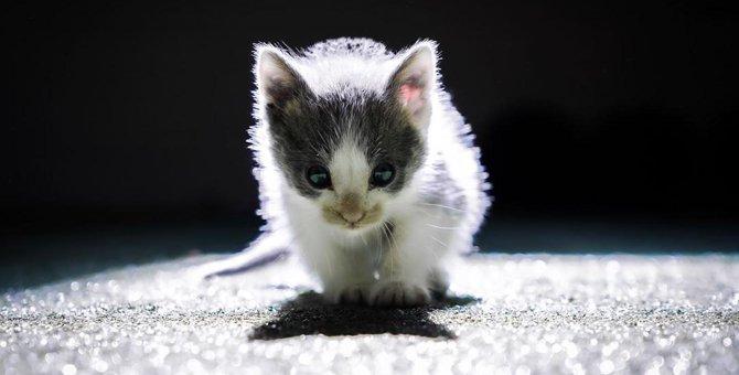 人生に悩んでいる時に救った生後2週間の子猫。本当に救われたのは…