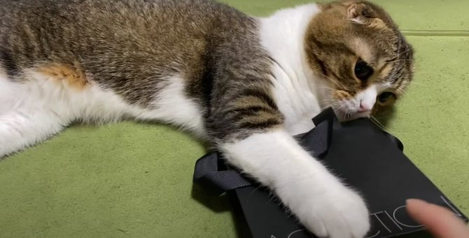 触っちゃダメ!!お気に入りの袋を守る猫さん♡