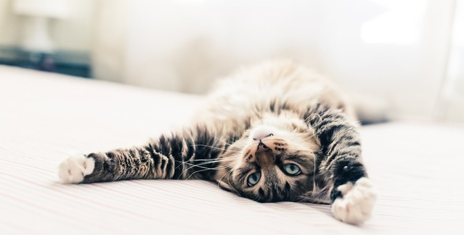 猫がバンザイする意味とその時の気持ち