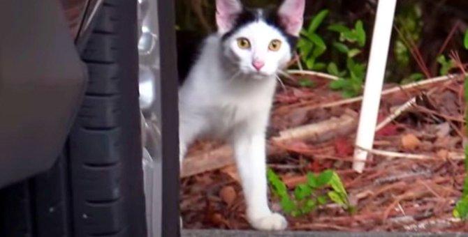 屋外に放り出された子猫…温かいお家で幸せに♡