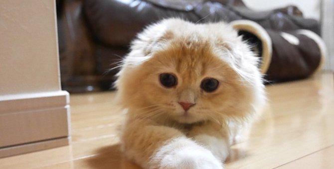 """ベルちゃんが伝えたいこと。""""世界猫の日"""""""