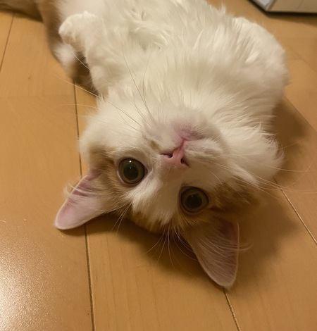 キュンキュンが止まらない♡猫が飼い主にする「甘え行動」4つ