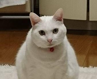 猫が思う『理想の飼い主』って?