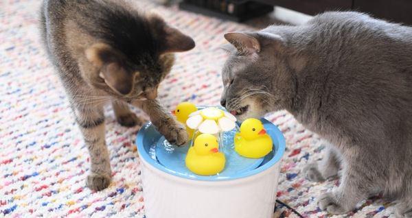 LAYLAの12猫占い【8/17~8/23】のあなたと猫ちゃんの運勢