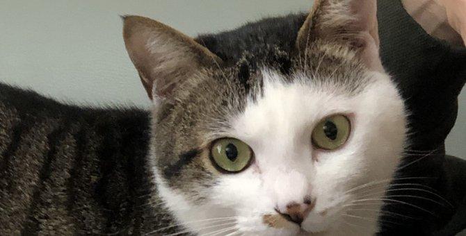 飼い主の愛に満たされている猫の性格5選!愛情を伝えるポイントとは?
